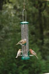 Quick-Clean Seed Tube Feeder