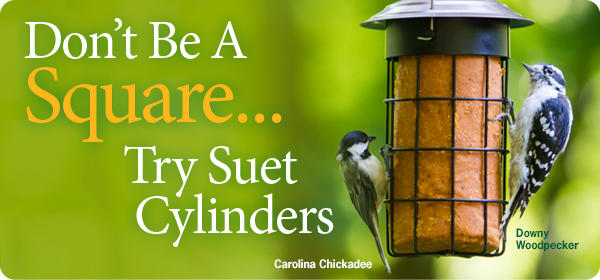 Suet Cylinders